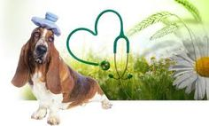 Monhagen Vet Hospital provide information of the causes of many common pet conditions and solutions for those conditions.