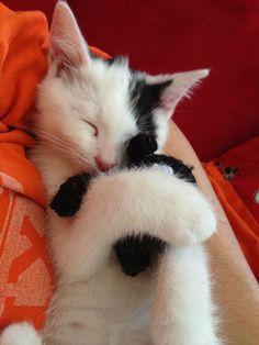 My kitten fell asleep hugging his favorite stuffed animal
