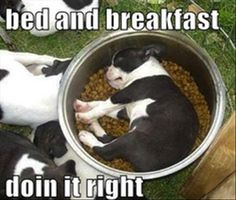 bed and breakfast funny pictures