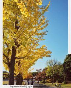 Como não se encantar com a beleza e a luz do ipê amarelo?! Quem anda pelo Showa Kinen Park em Tokio contempla paisagens espetaculares e uma enorme variedade de atividades recreativas.  Vamos anotar no caderninho  de lugares a conhecer na vida. Afinal sonhar não custa nada e faz um bem danado. Ad Pinterest/ arqdecoracao @arquiteturadecoracao @acstudio.arquitetura #arquiteturadecoracao #olioliteam #instagrambrasil #decor #arquitetura #showakinenpark #tokyo #toquio