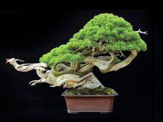 Bonsai Empire