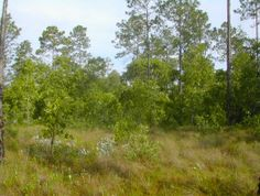 Simmons State Forest