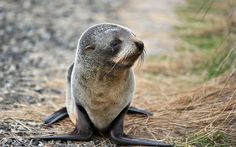 Fur Seals, New Zealand - The World's Best Places to See Baby Animals   Travel + Leisure
