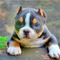 6 Great Tips for Getting Your Dog Toilet Trained Cute Funny Animals, Cute Baby Animals, Animals And Pets, Wild Animals, Beautiful Dogs, Animals Beautiful, Amstaff Terrier, Bull Terrier, Pitbull Pictures
