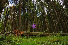 Monday best way to start the week!  Lázárfalva-Lăzărești #Erdő #Padure #forest  Fodor István  #ig_europe #green #vacation #explore #travel #discover #nature #passionpassport #bbctravel #visualsoflife #szeklerland #ldc #fingerprintofgod #flowers #travelgram #flowerstalking #mothernature #flowersofinstagram #popularphoto #ourdailyplanet #instagood #vscocam #bestnatureshots #optoutside #godscreation #heartimprint #earthlandscape Tourist Info, Explore Travel, Gods Creation, Amazing Nature, Exploring, Natural Beauty, Europe, Earth, Vacation