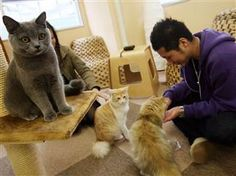 Parlez-vous meow? Cat-filled cafe to open in Paris (Photo: Junko Kimura / Getty Images)
