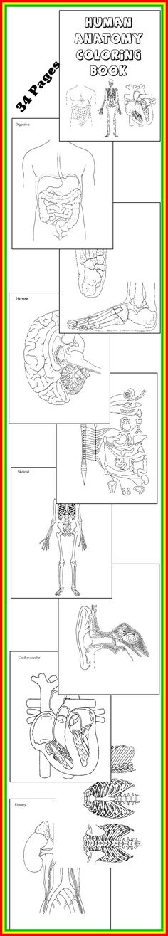 * SCIENCE DOWNLOAD ~ HUMAN ANATOMY COLORING BOOK * 32 diagrams to color and…