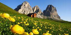 Speciale prato fiorito in Val di Fassa.