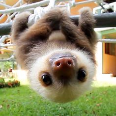 Super cute baby animals - Funny Wild Animal This video is a compilation of wildlife of animal babies. They're very cute animals just you have seen. Baby Animals Super Cute, Cute Little Animals, Cute Funny Animals, Cutest Animals, Cute Pets, Funny Cats, Cute Baby Sloths, Cute Sloth, Baby Otters
