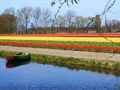 Die 15 besten Bilder von i amsterdam....   I amsterdam, Food ...