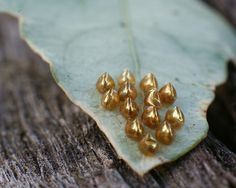 Insect Eggs, Nests, Grubs, Natural World, Nature Pictures, Mother Nature, Creepy, Butterflies, Amazing
