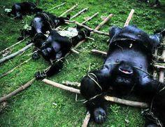 caça ao gorila - Pesquisa Google