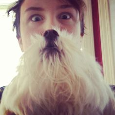 These 18 dog owners decided to wear their dogs like human beards. The results are a funny hybrid mix of adorable dogs and strange human pet owners. Funny Dogs, Cute Dogs, Funny Animals, All Dogs, Best Dogs, Dog Bearding, Cat Beard, Beard Humor, Kodak Moment