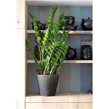 Afbeeldingsresultaat voor kamerplanten