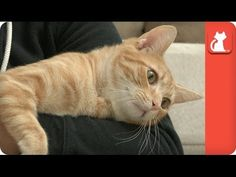 Tales of Survival  - Jules, kitten with an enlarged heart