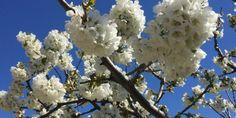 Spring in Provence @