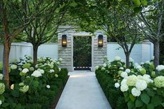 This Southern garden can be enjoyed no matter the season. This Southern garden can be enjoyed no matter the season. Front Yard Landscaping, Backyard Landscaping, Landscaping Ideas, Hydrangea Landscaping, Southern Landscaping, Hydrangea Garden, Hydrangeas, Landscaping Software, Back Gardens