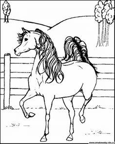 Schne ausmalbilder pferde 06 basteln werken pinterest malvorlage achmed pferd bilder fr schule und unterricht achmed pferd ausmalbild bild zum ausmalen zeichnung abb thecheapjerseys Images