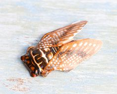 Vintage Bug Brooch - Made in Japan