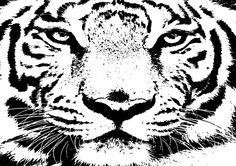 10 Big White Snow Tiger By Chris McCabe - DRAGAN GRAFIX, Stylish Vector Wall Art Posters That You Can Buy In High Resolution PDF Format And Print Any Size You Wish. Decorate Your Walls With Original Art. Only R350 Per Design. Many Designs To Choose From. I Also Create Custom Designed Vector Wall Art. For More Information Call Chris McCabe On 082 482 0076 OR Email chris@dragangrafix.co.za