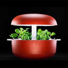 Gardening has never been this easy! Smart Gardens - www.plantui.com