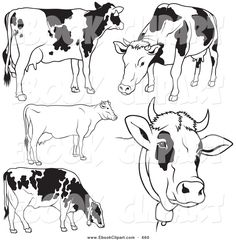 vector-clip-art-of-a-digital-set-of-black-and-white-dairy-cow-outlines-by-dero-660.jpg 1,024×1,044 pixels