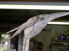 Heron in drift wood