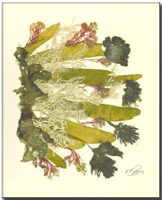 [][][] seaweed