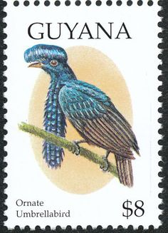 Long-wattled Umbrellabird stamps - mainly images - gallery format