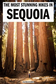 Best Hikes in Sequoia and Kings Canyon National Park — Walk My World Sequoia California, California Travel, California Style, Yosemite Sequoia, Sequoia Camping, Sequoia National Park Camping, Places To Travel, Places To See, Travel Around The World
