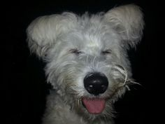 Poppy .. my mischief maker! Sooo cheeky and just love this pic as she looks as though she is smiling for the picture! X