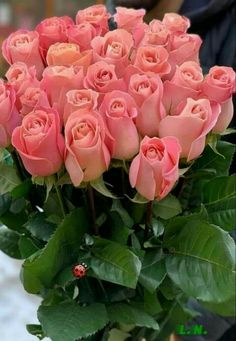 Flowers for you Beautiful Rose Flowers, Beautiful Flowers Wallpapers, Beautiful Flower Arrangements, Flowers Nature, Exotic Flowers, Amazing Flowers, Pretty Flowers, Pink Flowers, Purple Roses