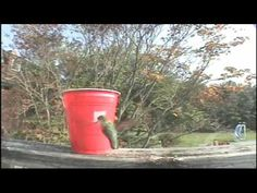 How to make a cheap hummingbird feeder with a red Solo cup.