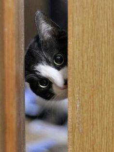 """""""Some animals are secretive, so,e are shy.  A cat is private."""" --Leonard Michaels"""