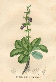 Three Old-Timey Herb Books You Can Read Online