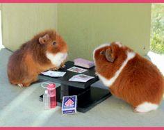 Want to join us? Pig Art, Cute Piggies, Strange Photos, Little Critter, Guinea Pigs, Cute Animals, Pets, Bunnies, Greeting Card