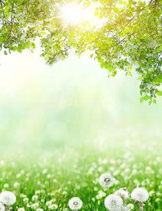 Dandelion Bokeh Sunshine For Spring Photography Backdrop Poster Background Design, Dslr Background Images, Bokeh Background, Background For Photography, Photography Backdrops, Episode Backgrounds, Wallpaper Backgrounds, Spring Photography, Nature Photography