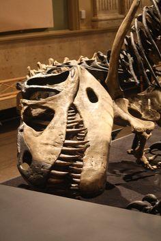 Torvosaurus at the Kenosha Dinosaur Discovery Museum | Flickr - Photo Sharing!