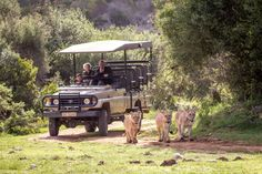 3 hour Guided Game Drives at Botlierskop. Day Visitors are welcome