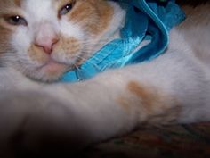 Chillin in his ribbons.