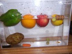sink or float fruits and veggies science fair project - Density Lesson Science Fair Projects, Science Experiments Kids, Science Lessons, Science For Kids, Science Activities, Preschool Food, Kindergarten Science, Science Classroom, Teaching Science