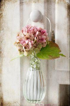 Single hydrangea blossom, so lovely! - via ana-rosa - source My Flower, Fresh Flowers, Pretty In Pink, Pink Flowers, Beautiful Flowers, Flower Power, Purple Roses, Pale Pink, Ikebana