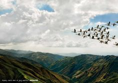 Iberia: Birds   Ads of the World™