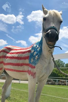 In 1777, we adopted the Stars and Stripes as our national flag. We offer a 5% military discount on all purchases everyday of the year. Combine any Flex Fence® rail type to make the horse fence system you need. Our Flex Fence® is made here in the USA. #flagday #rammfence #flexfence #equestrian #horses #usa #veterans #military