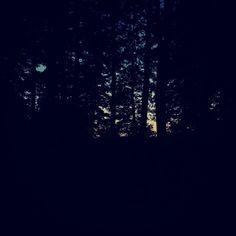 #dark #forest #ciemny #las #trees #drzewa #night #noc #wilderness #dzicz