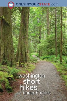 Travel | Washington | Attractions | Sites | Explore | Things To Do | Hiking | Hikes | Best Hikes | Short Hikes | Trails