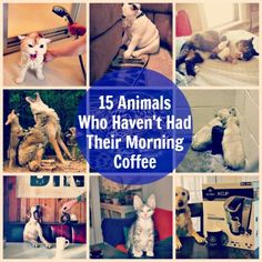 Animals Who Haven't Had Their Morning Coffee - Babble.com