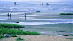 Vadehavet at Jytlands westcoast