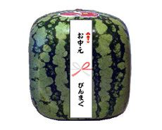 Funny Shaped Japanese Watermelons | PingMag : Art, Design, Life – from Japan