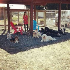 Everyone say cheese! Talk about a photogetic group of buddies. Dog Kennels, The Ranch, Dog Training, Dog Lovers, Cheese, Group, Dogs, Animals, Animales